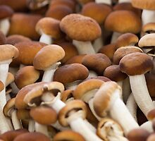 honey mushrooms by spetenfia