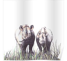 Mother and Young Rhino Poster