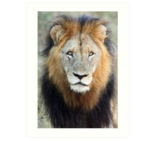 Have you ever seen a mane like this!! Art Print