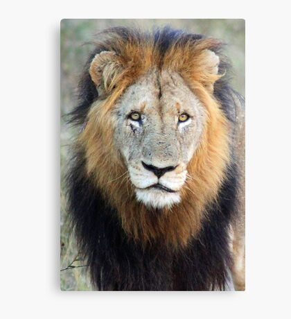 Have you ever seen a mane like this!! Canvas Print