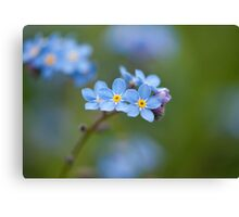 Tiny forget-me-not flowers Canvas Print
