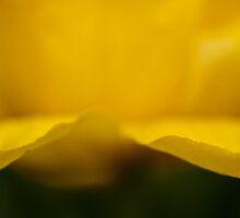 Yellow  by YelenaYK