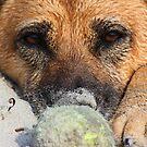 My Ball by Dana DiPasquale
