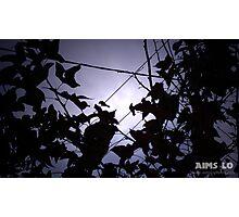 2 Birds on 2 Wires Photographic Print