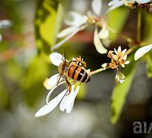 Bee's Bum by -aimslo-