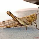 Grasshopper by -aimslo-