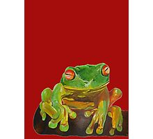Cute Red Eyed Tree Frog Photographic Print