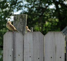On The Fence by Nevermind the Camera Photography