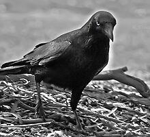 The Black Crow by bluetaipan