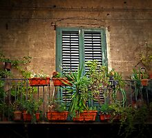 The Balcony Garden by Lucinda Walter