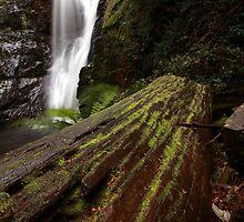 old tree, mathinna falls. northeast tasmania, australia by tim buckley | bodhiimages