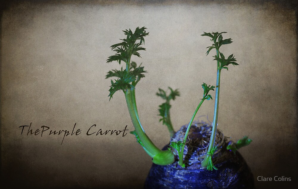 The Purple Carrot by Clare Colins