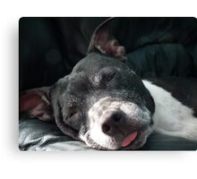 It's Tough Being Adorable Canvas Print