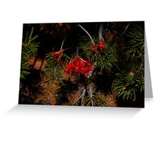 Grand Canyon National Park Wildflowers Greeting Card