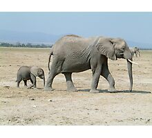 African Elephant, Mother and Baby Photographic Print