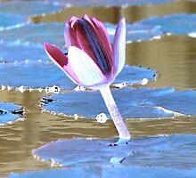 Neon Water Lily by aprilann