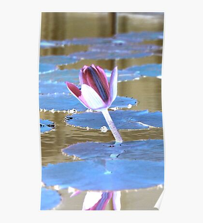Neon Water Lily Poster