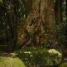 Magic in the Jungle by MardiGCalero