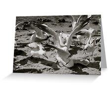 Sea Gulls Greeting Card