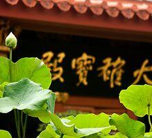 New born lotus by BengLim