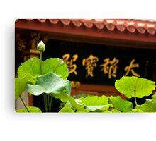 New born lotus Canvas Print