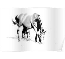 Horse B Poster