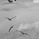 Seagulls by StarKatz