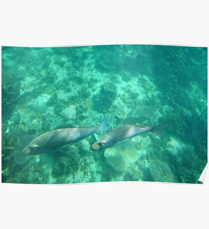 An underwater scene at Ningaloo Reef Poster