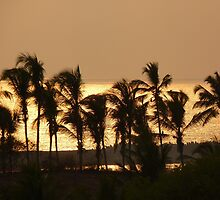 Sunset Palm Trees Sea Atmosphere by HQPhotos