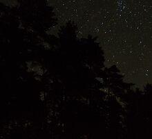 Stars. by tutulele