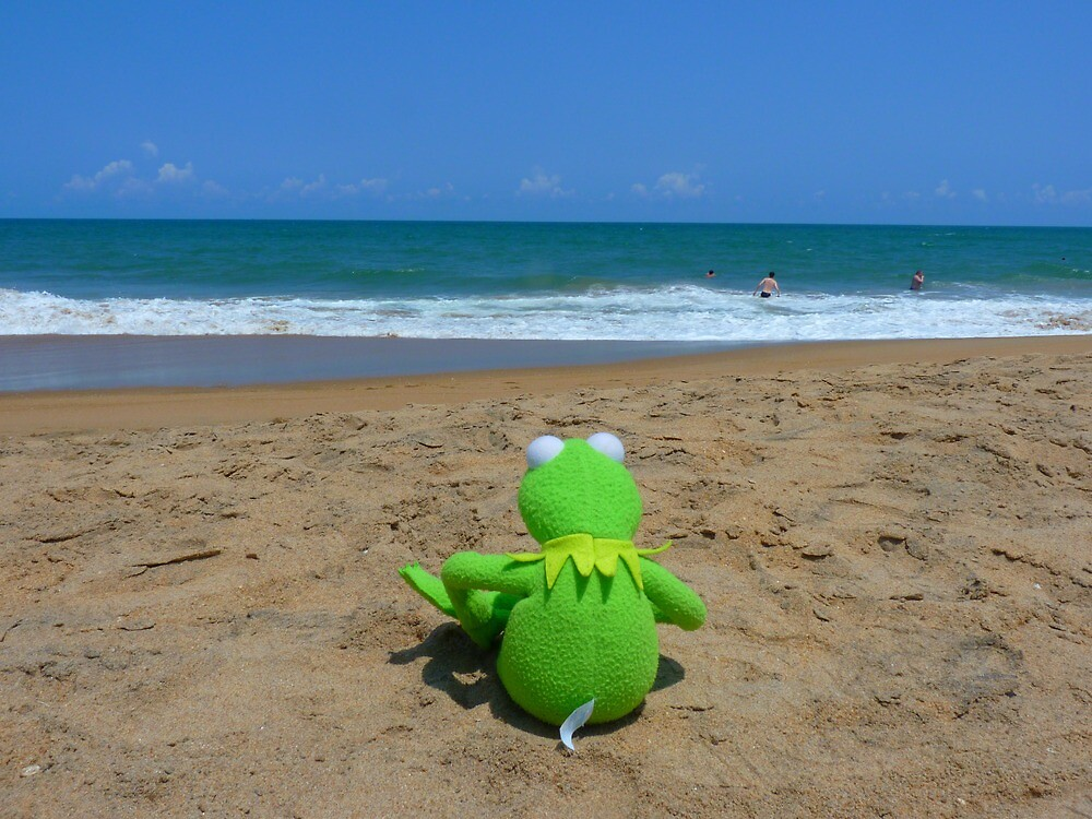 Beach Sea Sea view Water Lonely Frog by HQPhotos