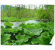 Butterbur Leaves Large Nature Water Poster