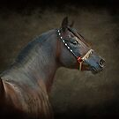 The Stallion by Lover1969