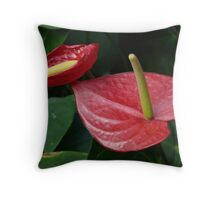 Kleine Flamingoblume Anthurium Scherzerianum Throw Pillow