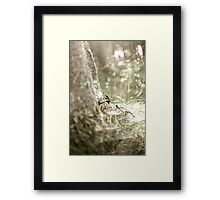 At the end of the tree Framed Print