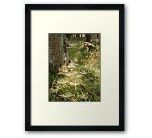 A spider's work Framed Print