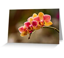 Orchid Glow Greeting Card