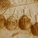 Limulus Polyphemus Line Up by M-EK