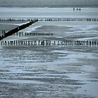Wadden Sea, Netherlands 2003 by Michel Meijer