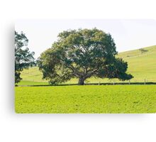 Wide Tree Canvas Print
