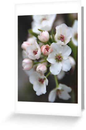 White and Pink Flowers by Vonnie Murfin