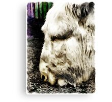 """One can't complain"" said Eeyore  Canvas Print"