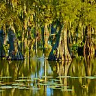 Reflections of a Bayou Autumn by Jessica Tamler