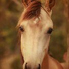 Horse by TimeScape
