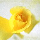 Yellow flower by TimeScape