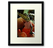 Meet My New Hatchling Lilly The Baby Alligator!!! Framed Print