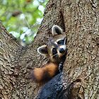 Tree Hugger by Karen Peron