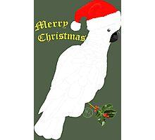 Christmas Cocky Photographic Print