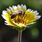 Honeybee on a Yellow Flower by TheBluePlanet