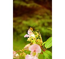 Chasing Dragonflies Photographic Print